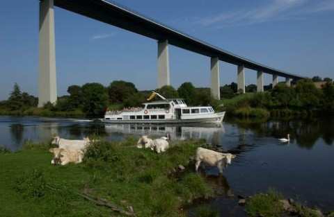 Die Friedrich Freye im Ruhrtal unterhalb der Ruhrtalbrücke mit Kühen im Vordergrund.